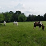 28 acres of beautiful pastures